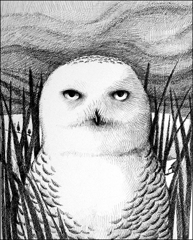 Snowy Owl, Anne Hunter, Illustrator