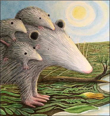Possum Family, Anne Hunter, Illustrator